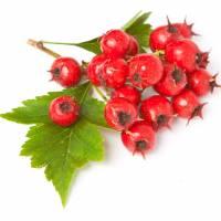 GŁÓG-Zdrowotny Składnik Naszych Herbat- WEJDŹ I SPRAWDŹ