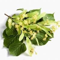 LIŚĆ LIPY-Zdrowotny Składnik Naszych Herbat- WEJDŹ I SPRAWDŹ
