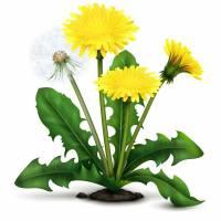 MNISZEK -Zdrowotny Składnik Naszych Herbat- WEJDŹ I SPRAWDŹ