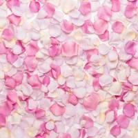 Płatki roży