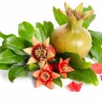 KWIATY GRANATU- Zdrowotny Składnik Naszych Herbat- WEJDŹ I SPRAWDŹ