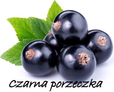 czarna-porzeczka
