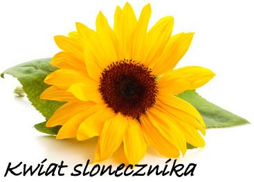 kwiat-słonecznika